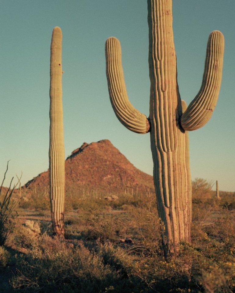 molly steele cactus
