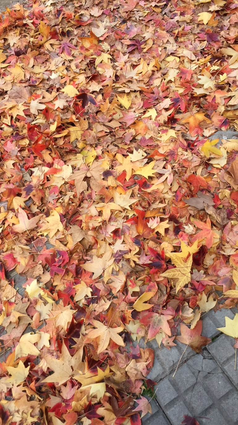 otoño en montevideo