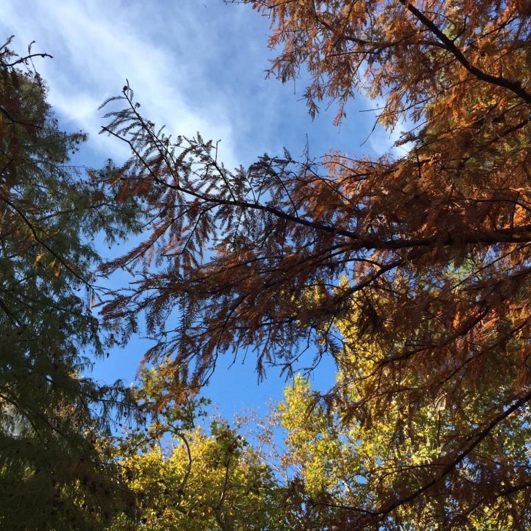 otoño montevideo